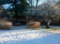 Winter january snow miscanthus apple tree
