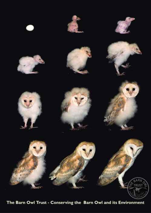 Baby Owls Legs : Facts, Trust