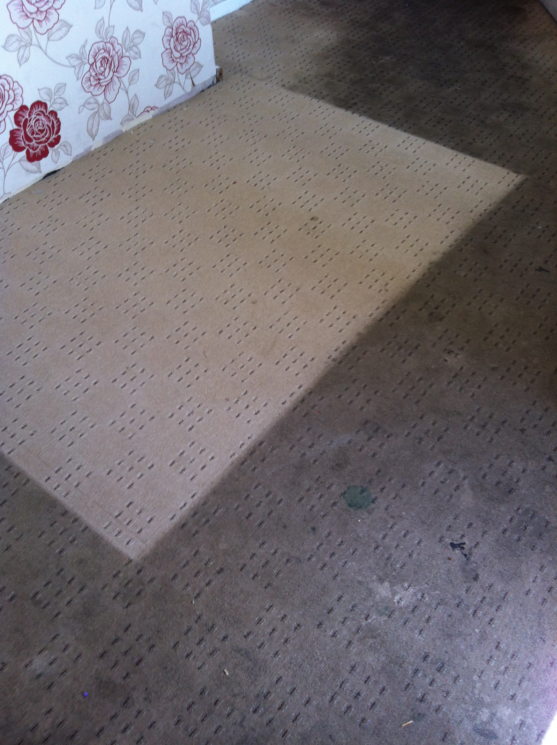 Rapid resoiling from using a Rug Doctor  Barnsley Carpet