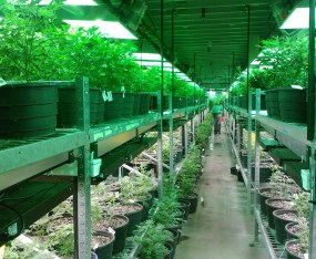 Michigan Medical Marijuana Licensees Must Obtain Business Insurance