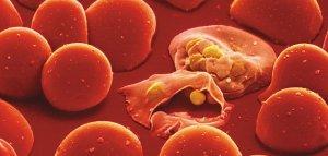 Phenom-Malaria-parasite-