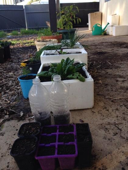 A selection of the garden