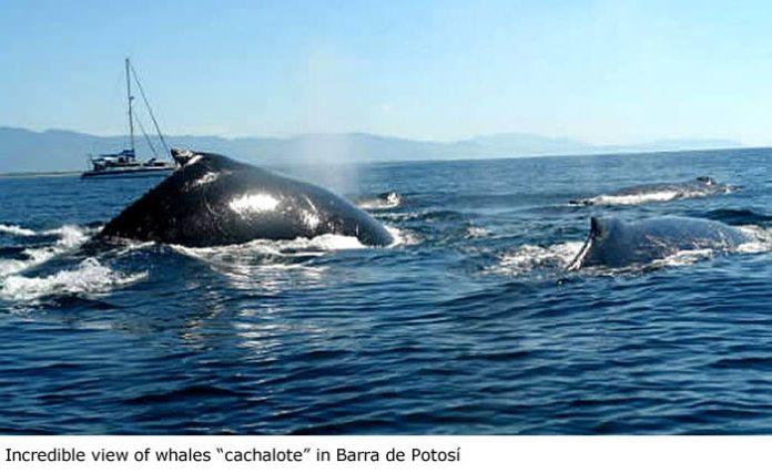 Resultado de imagen de Barra de Potosí