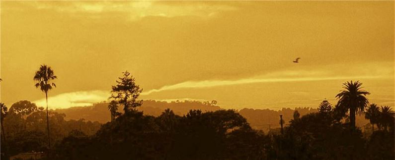Bird-Sunset-Browns