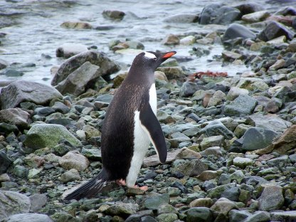 penguin-at-camara