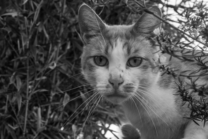cat_canal_20120929-4