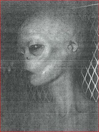 Autopsy Notes On Extraterrestrial Biological Entities (EBE): Real Dead  Aliens? – Aliens Above, Ghosts Below