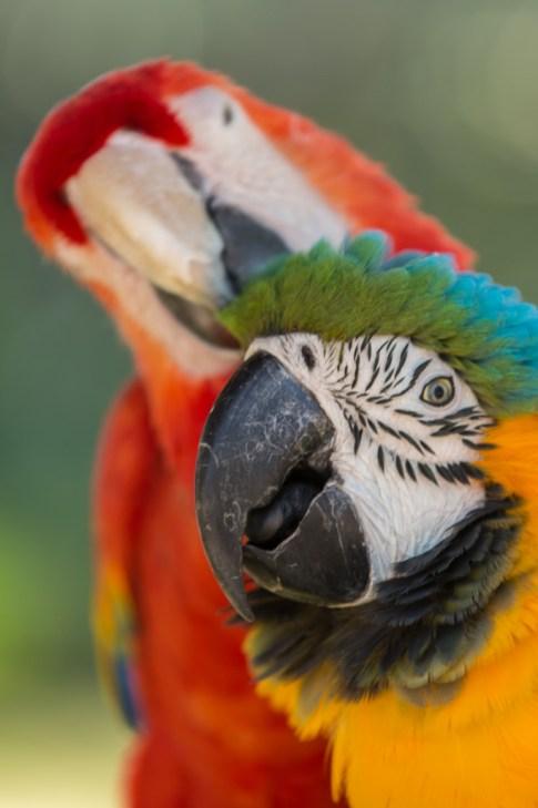Parrot Grooming