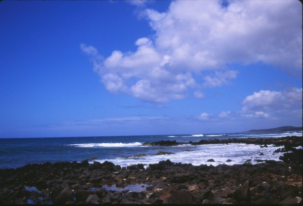 Hunt Perfect Hawaiian Shirt Barry Zwick