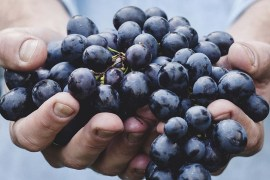 grow-grapevines-from-seeds