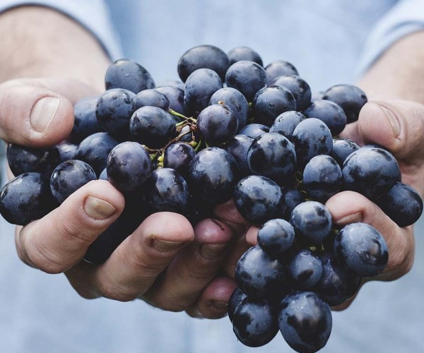 How to Grow Grapevines from Seeds