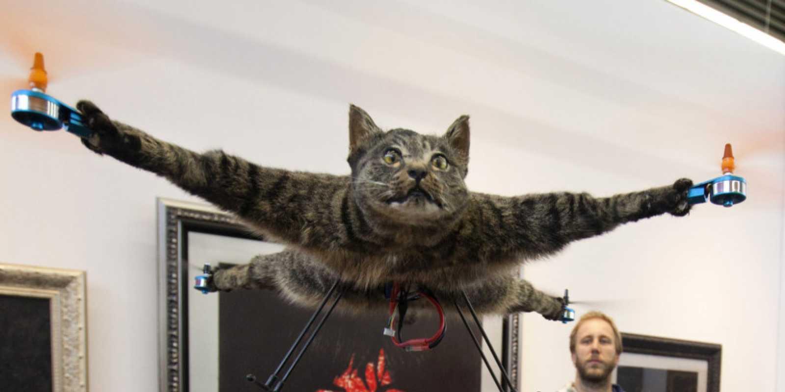 Bart Jansen Cat Drone