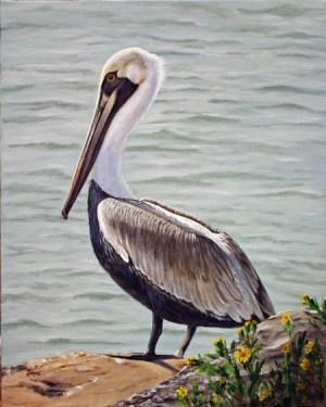 Pelican20x16Web