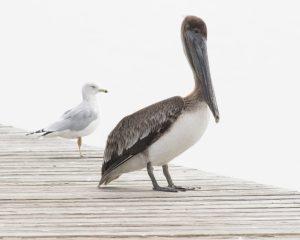 Sea Birds Waiting