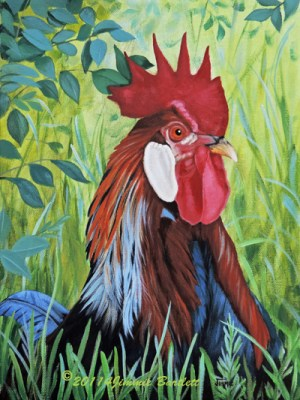 Outlaw Rooster