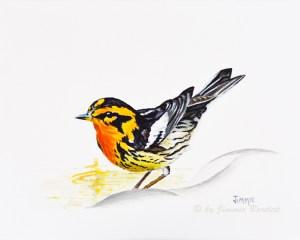 Bird BlackburnianWarbler3WEB