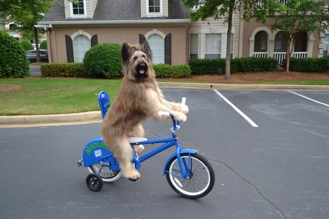 Barton Haynes Dog