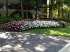sunpatiens in pt shade