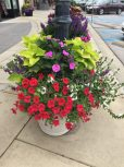 Red petunias, white scaevola, yellow coleus and Sunpatiens Compact Lilac