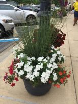 Juncus Blue Arrow with Vinca Cora white, dark pink petunias on left and Portulaca Pazazz Red Flare on right