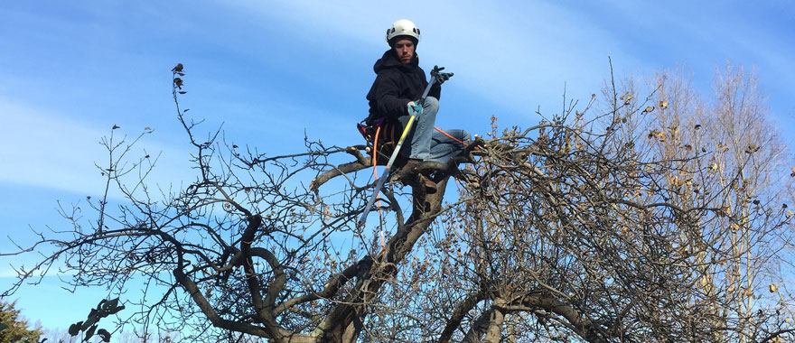 When Why How To Prune Fruit Trees In Ct Barts Tree