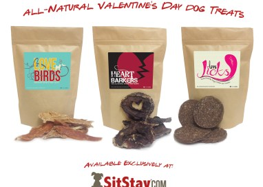 Valentine's Day treat for dogs
