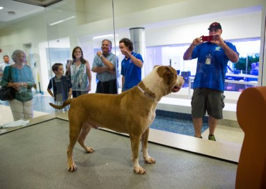 Miami-Dade County Blazes Trails for Animal Shelters Across the USA