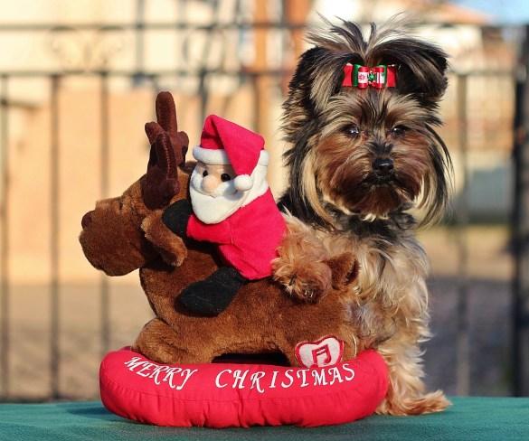 Christmas Gifts for Your Dog