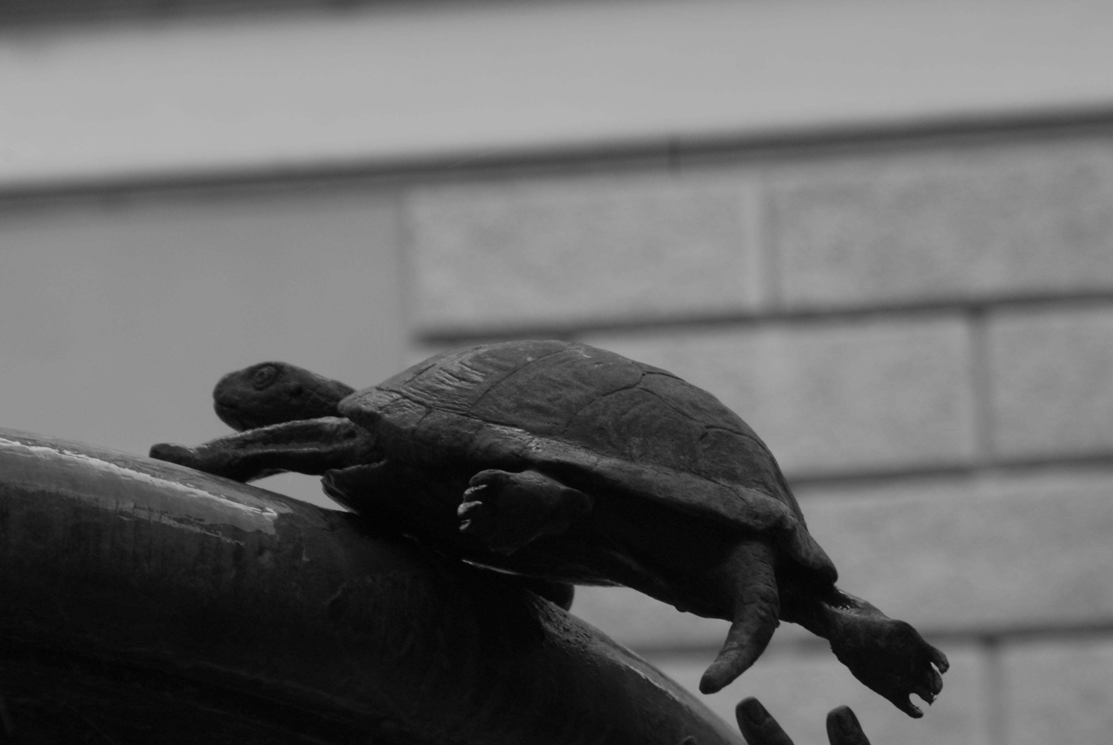 Foto di Valentina Perniciaro, tartarughe per il Ghetto