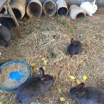 פינות חי בצפון - ברווזים בכפר