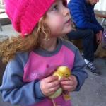 ברווזים בכפר - פינות ליטוף בצפון