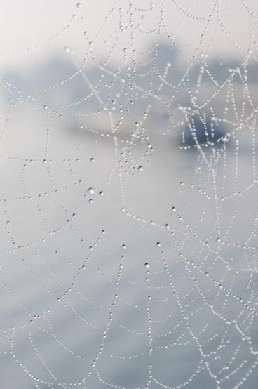 WWPW Spiderweb