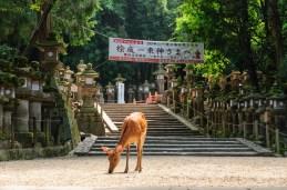 Hert in Japan