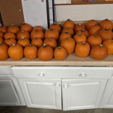 Why did Will buy so many pumpkins?
