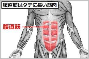 rectus-abdominis-muscle