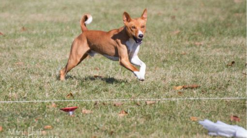 Coursing Ability Tests (CAT)