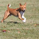 Coursing Ability Tests