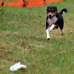 Fast Coursing Ability Test