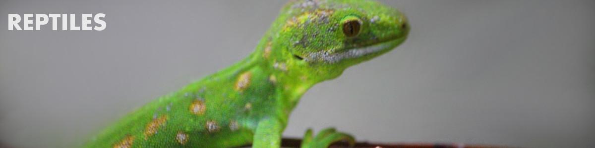 general description of reptiles