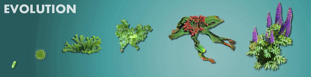 Evolution | Basic Biology