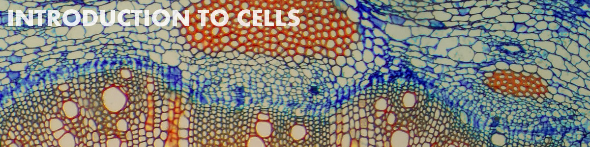 Introduction to cells   Basic Biology