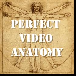 perfect profitable video anatomy