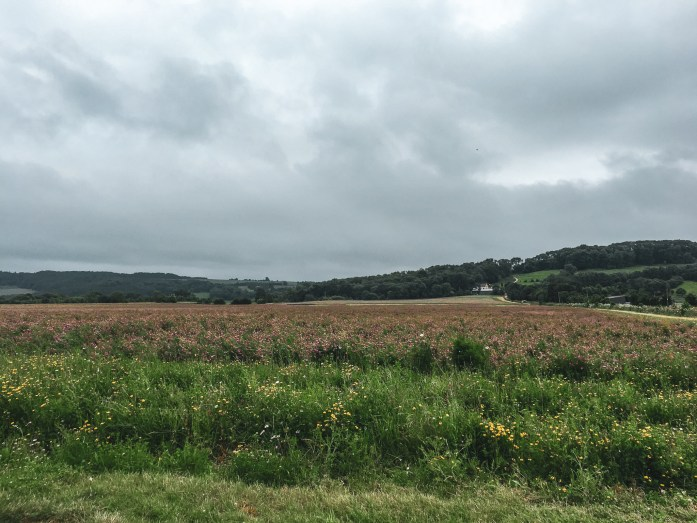 Field along the Cotswold Way