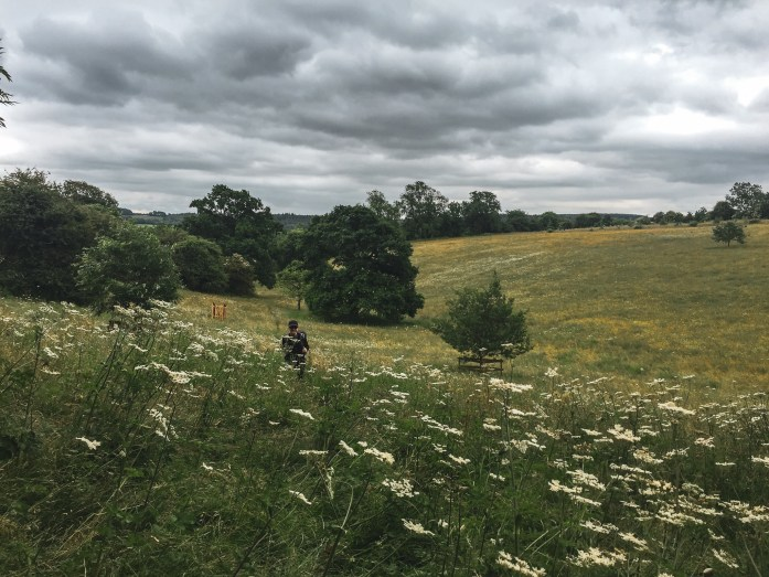 Meadows in the Cotswolds