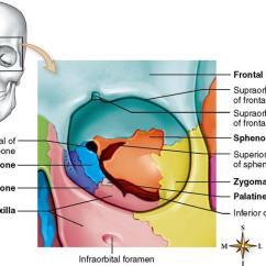 Axial Skeleton Skull Diagram 4 Way Trailer Wiring Harness Skeletal System | Basicmedical Key