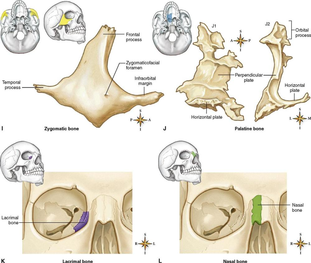 medium resolution of figure 9 8 bones of the skull a right parietal bone viewed from the lateral side b right temporal bone viewed from the lateral side