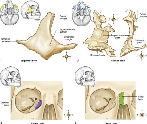 small resolution of figure 9 8 bones of the skull a right parietal bone viewed from the lateral side b right temporal bone viewed from the lateral side