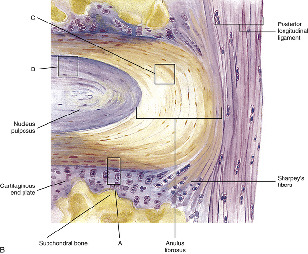 Microscopic Anatomy of the Zygapophysial Joints. Intervertebral Discs. and Other Major Tissues of the Back | Basicmedical Key