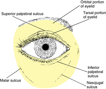 parts of the eyelid diagram fender pickups wiring ocular adnexa and lacrimal system | basicmedical key