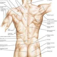 Human Spine Diagram Bones Vertebrae Ac Motor Wiring 2: Back And Spinal Cord | Basicmedical Key